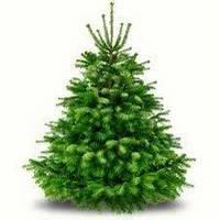 Commandez votre sapin de Noël